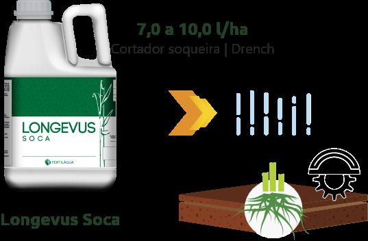 Cana Soca